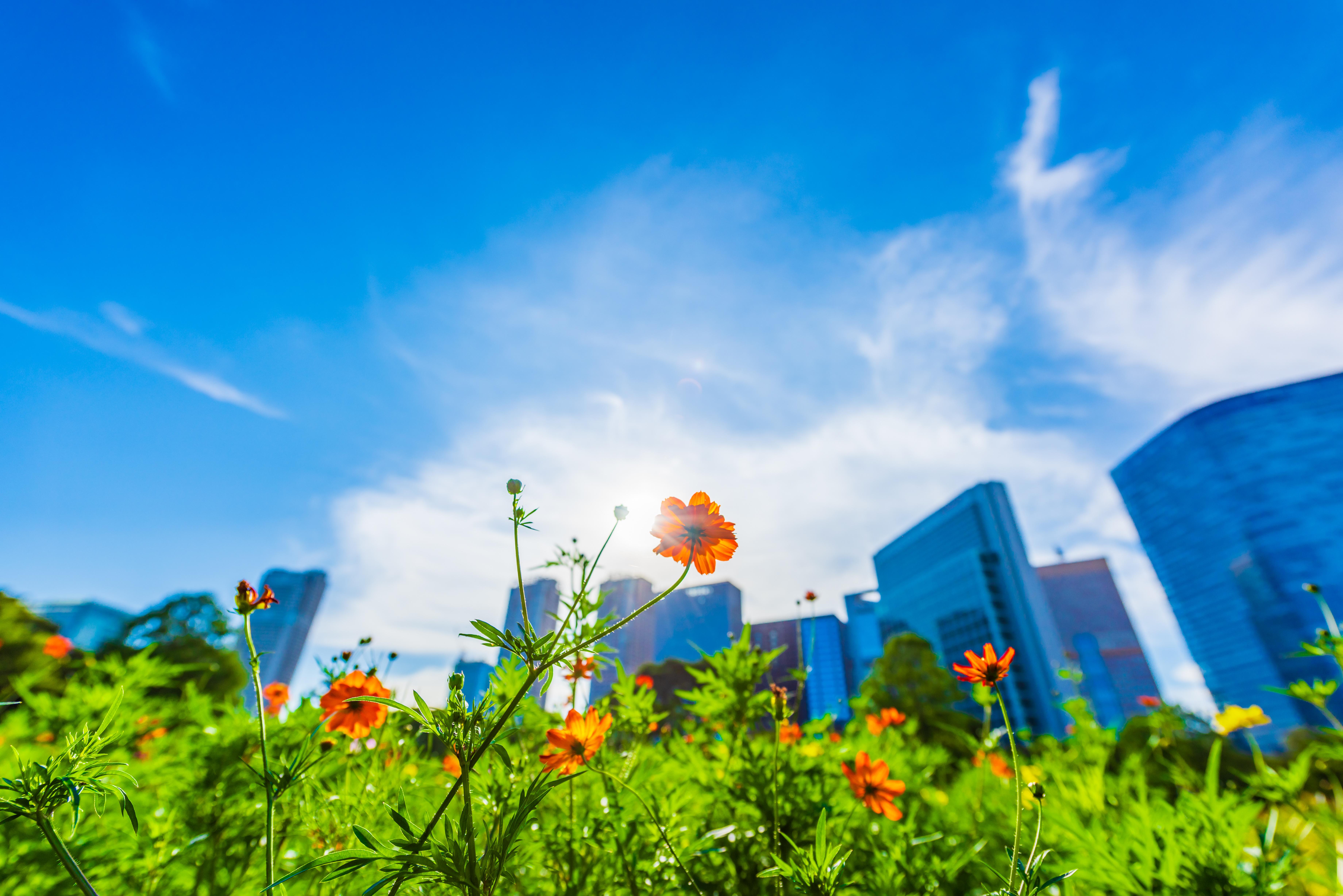 RE100メンバー会に参加し、日本における再生可能エネルギーの普及を促進